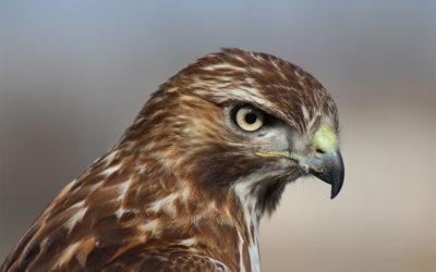 Hawk Detective Services – Latest News